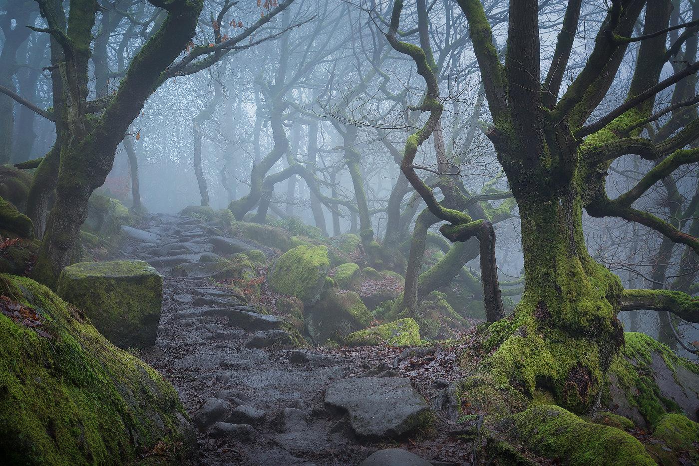 Padley Gorge Misty Woodland