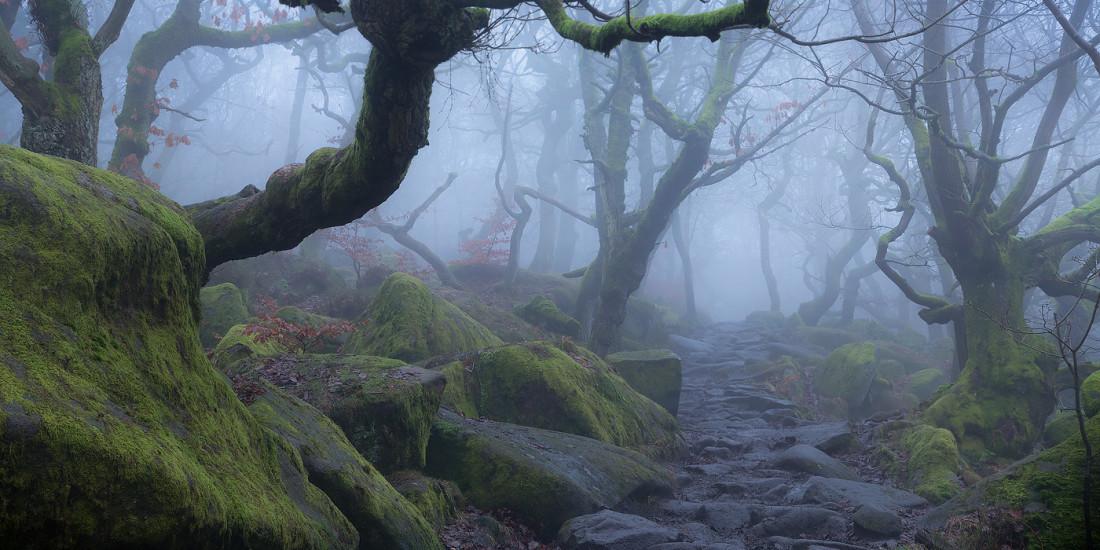 Padley Gorge Fog - Peak District woods