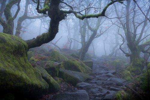 Padley Gorge Fog