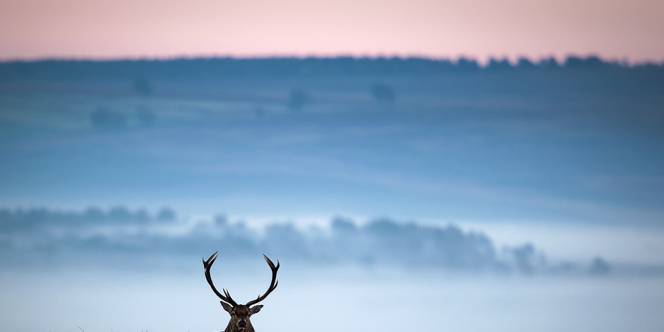 Red Deer photography workshop - Stag, Deer Rutt