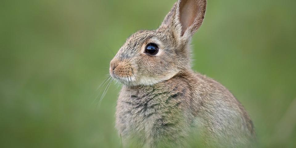Wildlife Photography Workshop - Rabbit