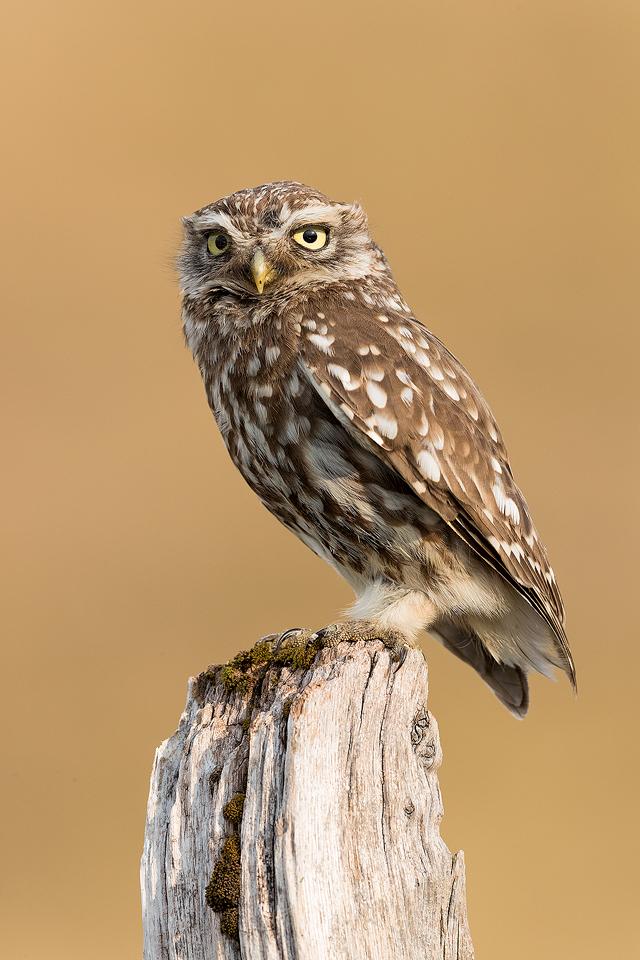 Wild Owl Photography Workshop