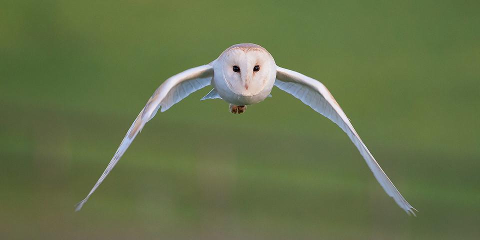 Owl Photography Workshop - Barn Owl stare