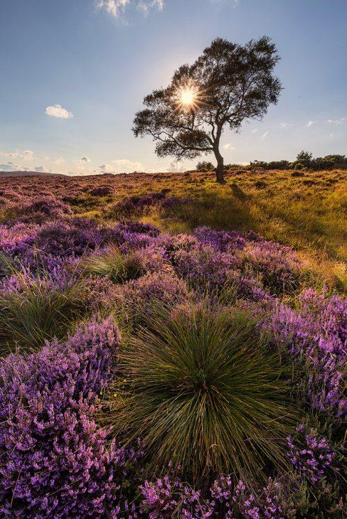 Lawrence Field in Bloom