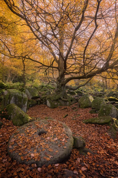 Padley Gorge Millstone in Autumn