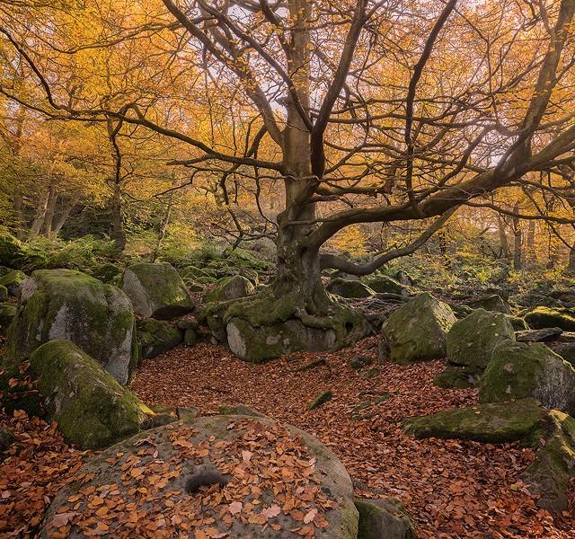 Padley Gorge Millstone
