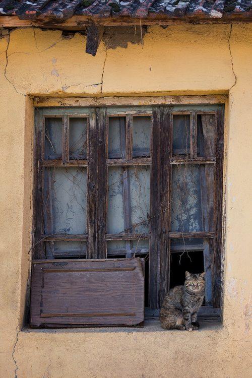 Feral Cat – Lake Kerkini