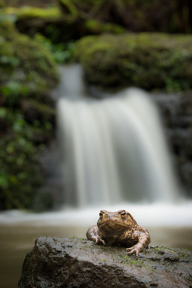 The Toad and the Waterfall