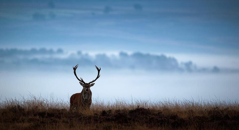 Red Deer photography workshop - Stag, Deer Rutt