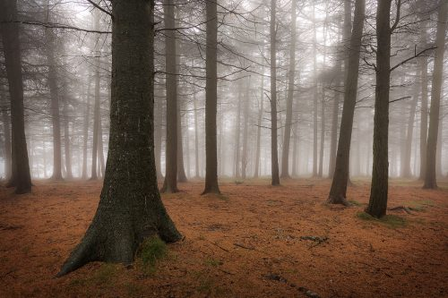Misty morning at Shillito Wood - Peak District Photography