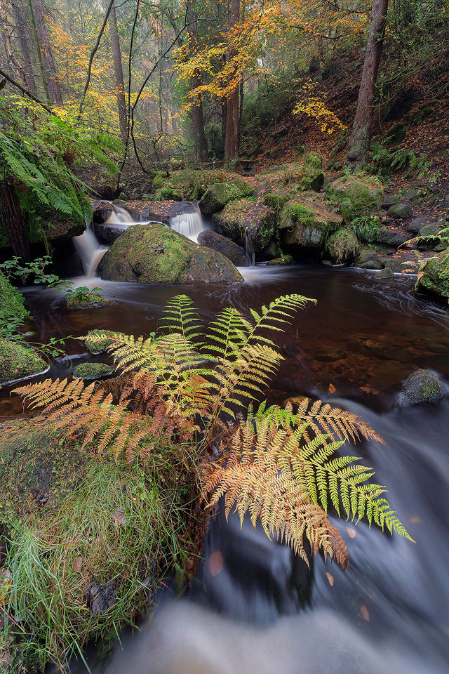 Wyming Brook Fern - Peak District Photography, Highly Commended, Wild Woods, BWPA 2016