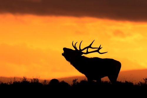 Stag Silhouette - Peak District Wildlife Photography