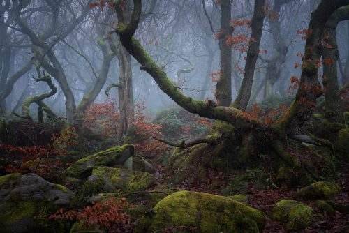 Padley Gorge Woodland - Peak District Fine Art Photography