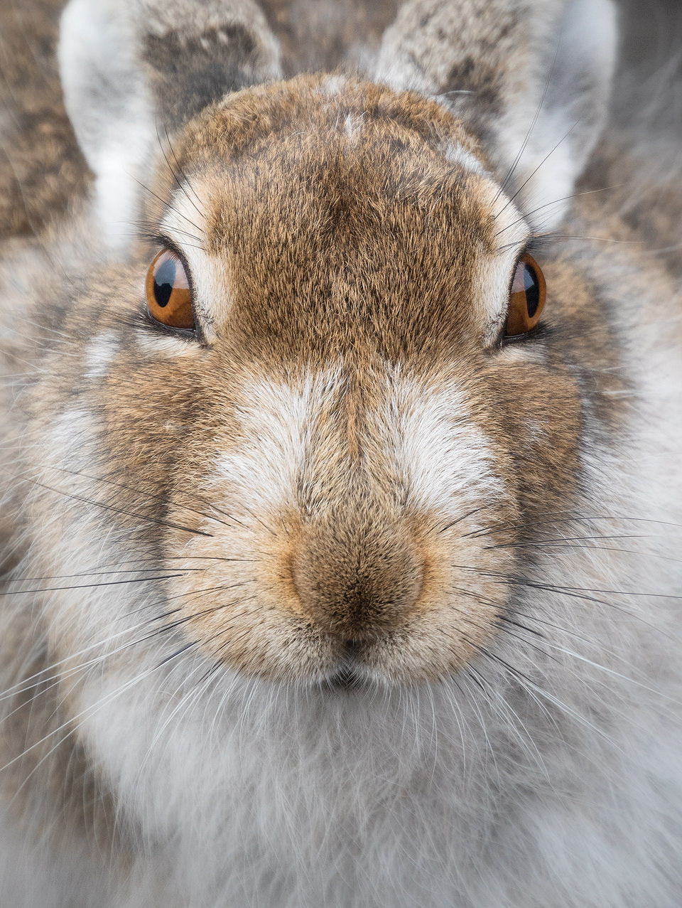 Mountain Hare Photography Workshop