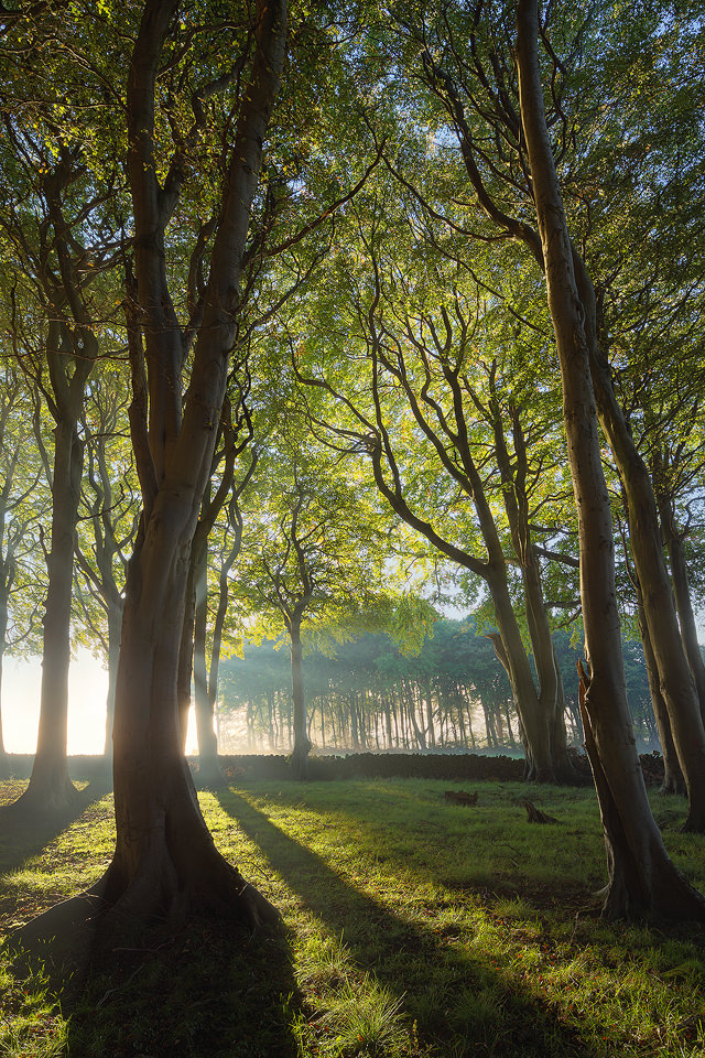 Hazy Trees, King's Piece
