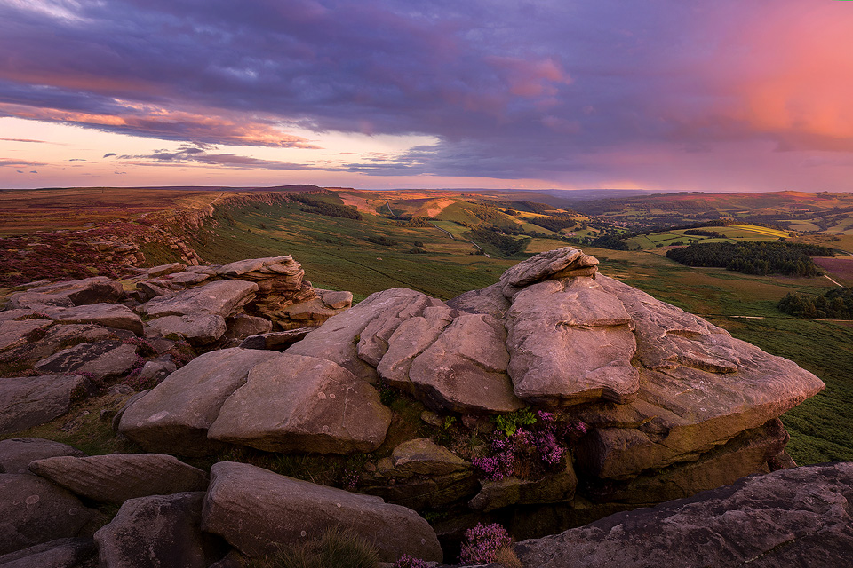 Blooming heather at High Neb, the highest point on Stanage Edge. Peak District Photography.
