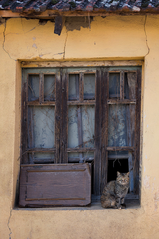 Cat in the window of an old tumbledown building. Whilst driving around Lake Kerkini one afternoon I couldn't resist stopping to capture this picture perfect scene. During my time in Greece I was surprised by the sheer number of feral cats and dogs. Despite not having owners most of them seemed to be in good health and very friendly, thanks to a government scheme. Although the dogs did keep trying to bite the car tyres as we passed!