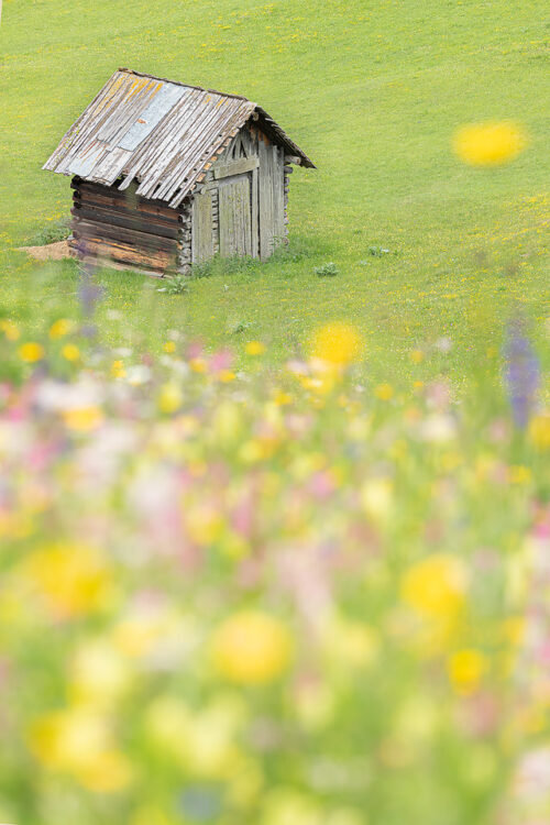 Alpine Wildflower Meadow. A rustic wooden hay barn at the edge of an Alpine wildflower meadow. Western Tyrol, Austria. Crouching low and focusing on the barn in the distance enabled me to completely blur the flowers into a mix of colour.Western Tirol, Austria. I visited this fantastic region as a prize for my award win in the British Wildlife Photography Awards.