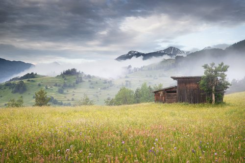 A rustic wooden hay barn in a beautiful Alpine wildflower meadow. We were treated to several misty mornings like this during the trip, a landscape photographers paradise! Western Tirol, Austria.