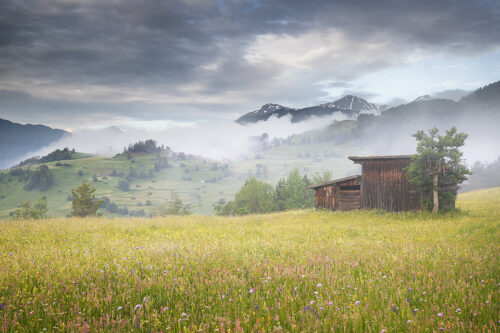 A rustic wooden hay barn in a beautiful Alpine wildflower meadow. We were treated to several misty mornings like this during the trip, a landscape photographers paradise! Western Tirol, Austria. I visited this fantastic region as a prize for my award win in the British Wildlife Photography Awards .