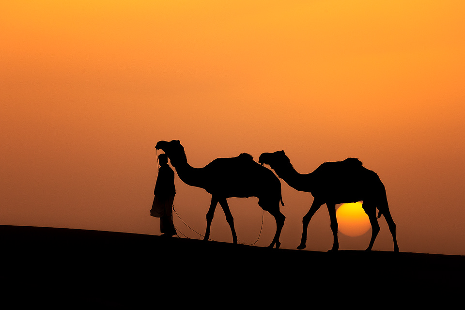 Sunset Camel Silhouette. Two camels and their herder walk along the top of a sand dune whilst silhouetted against the setting sun. Desert National Park (DNP), Thar Desert, Rajasthan, India.